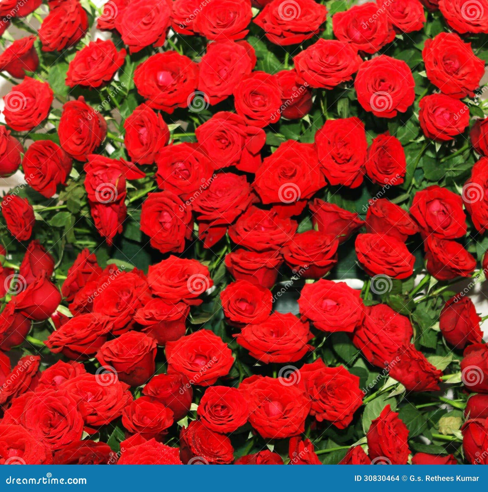 Letto di rosa rossa