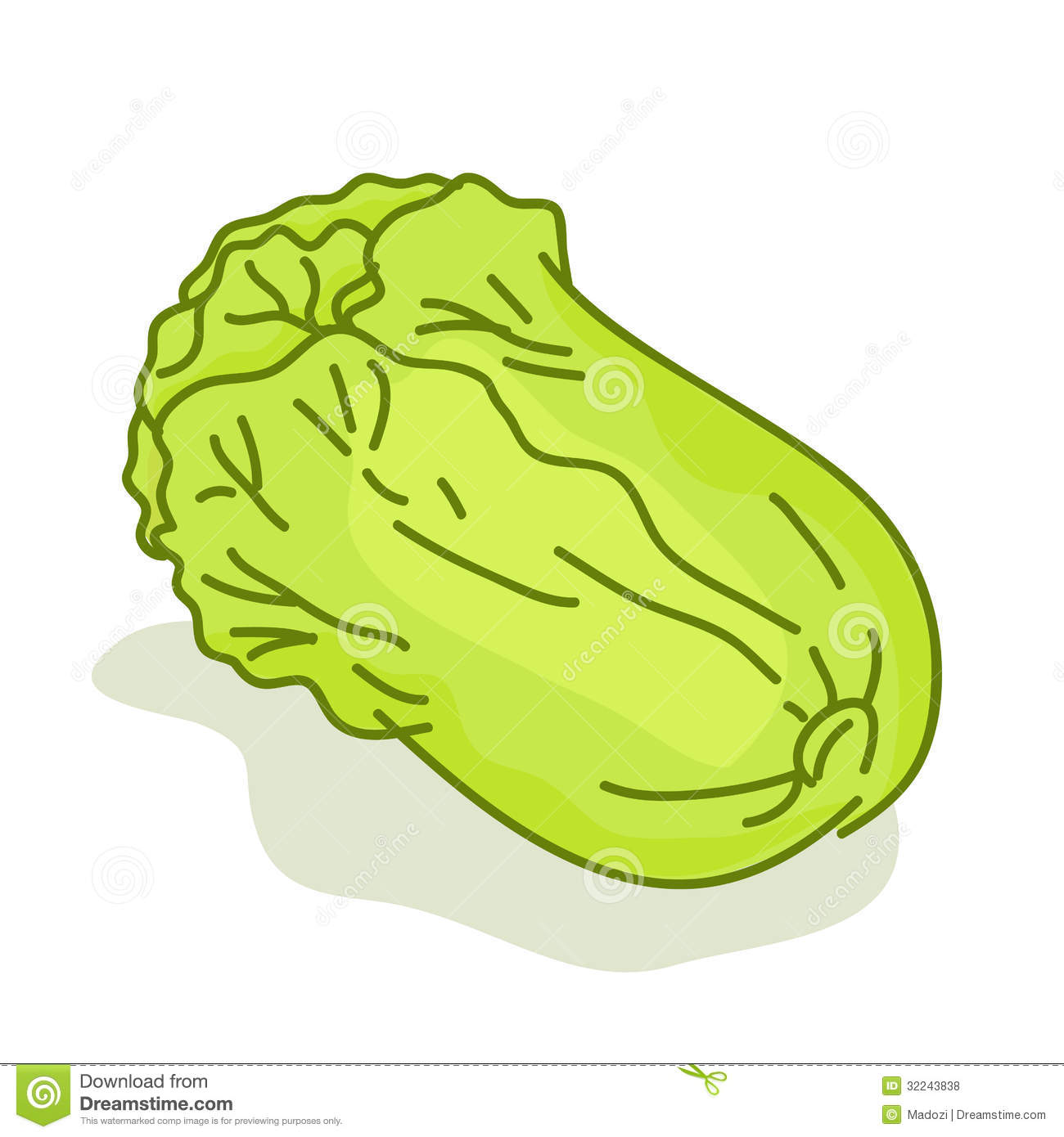 Lettuce Cartoon Isolated Illustration Royalty Free Stock Photos ...