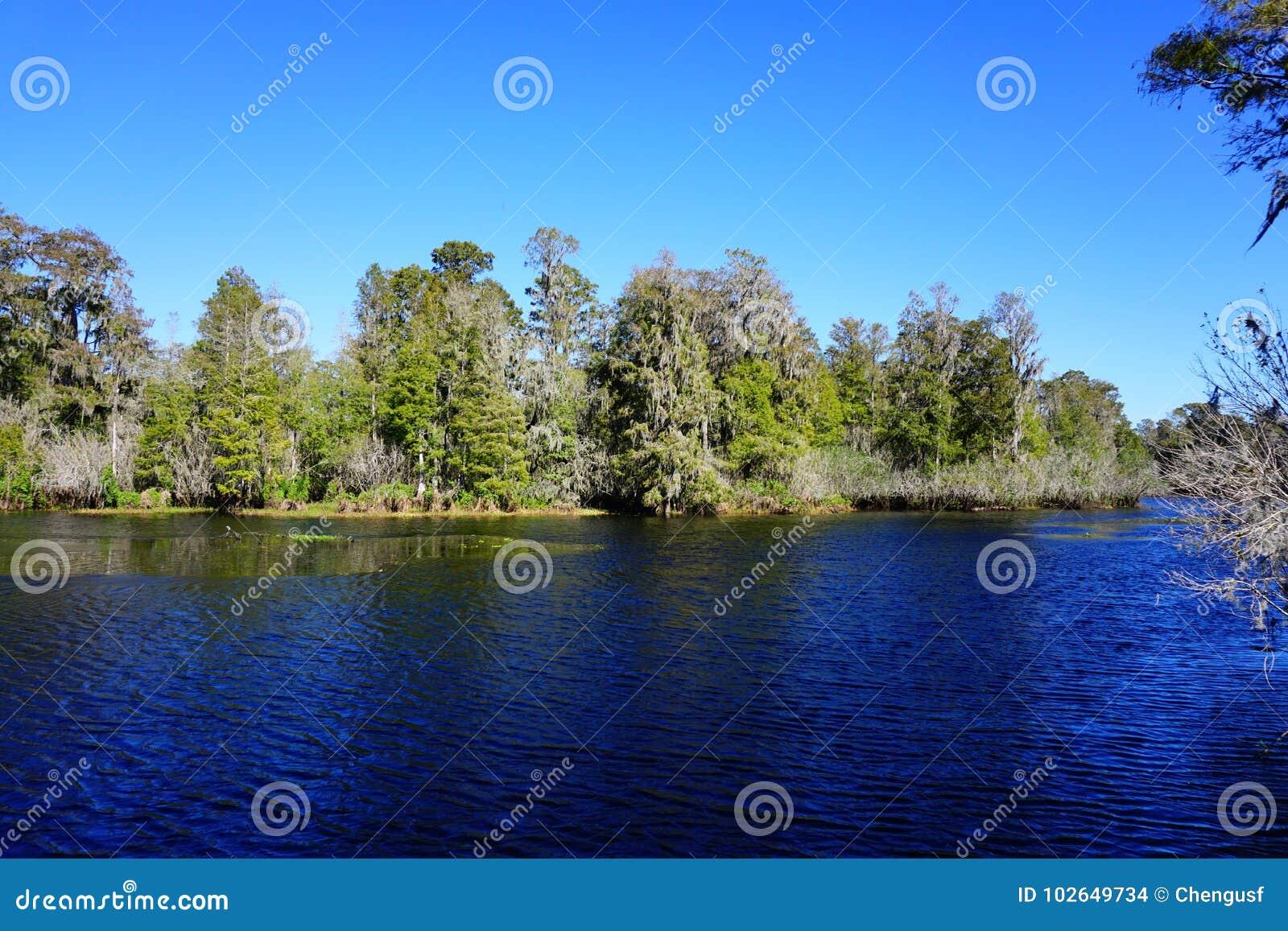 Lettuce lake