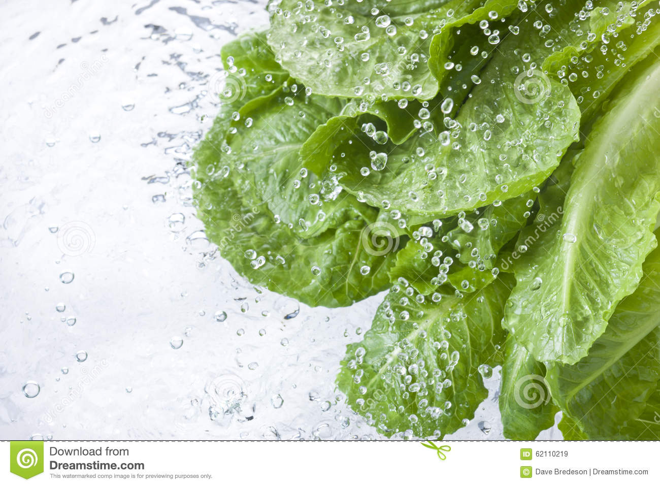 Washing Lettuce Leafy Water Spray Drops