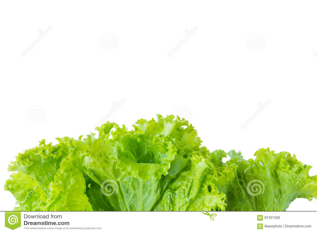 Lettuce and white background