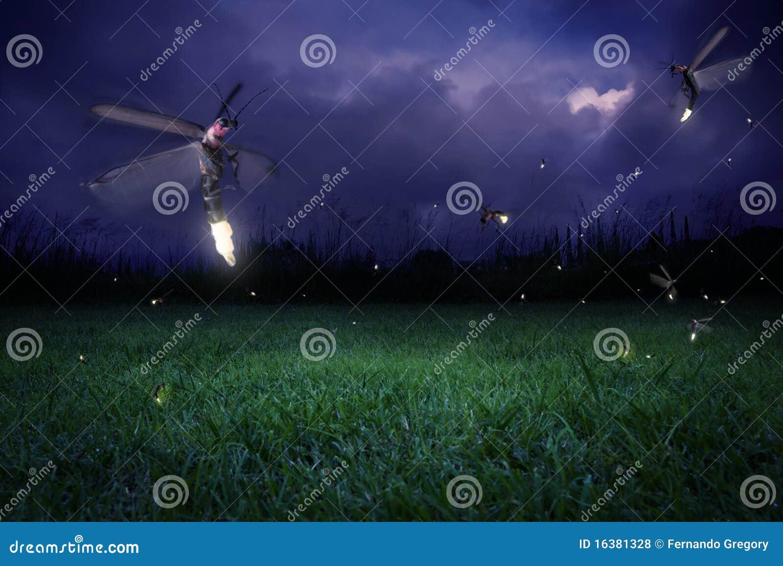 Leuchtkäfer nachts