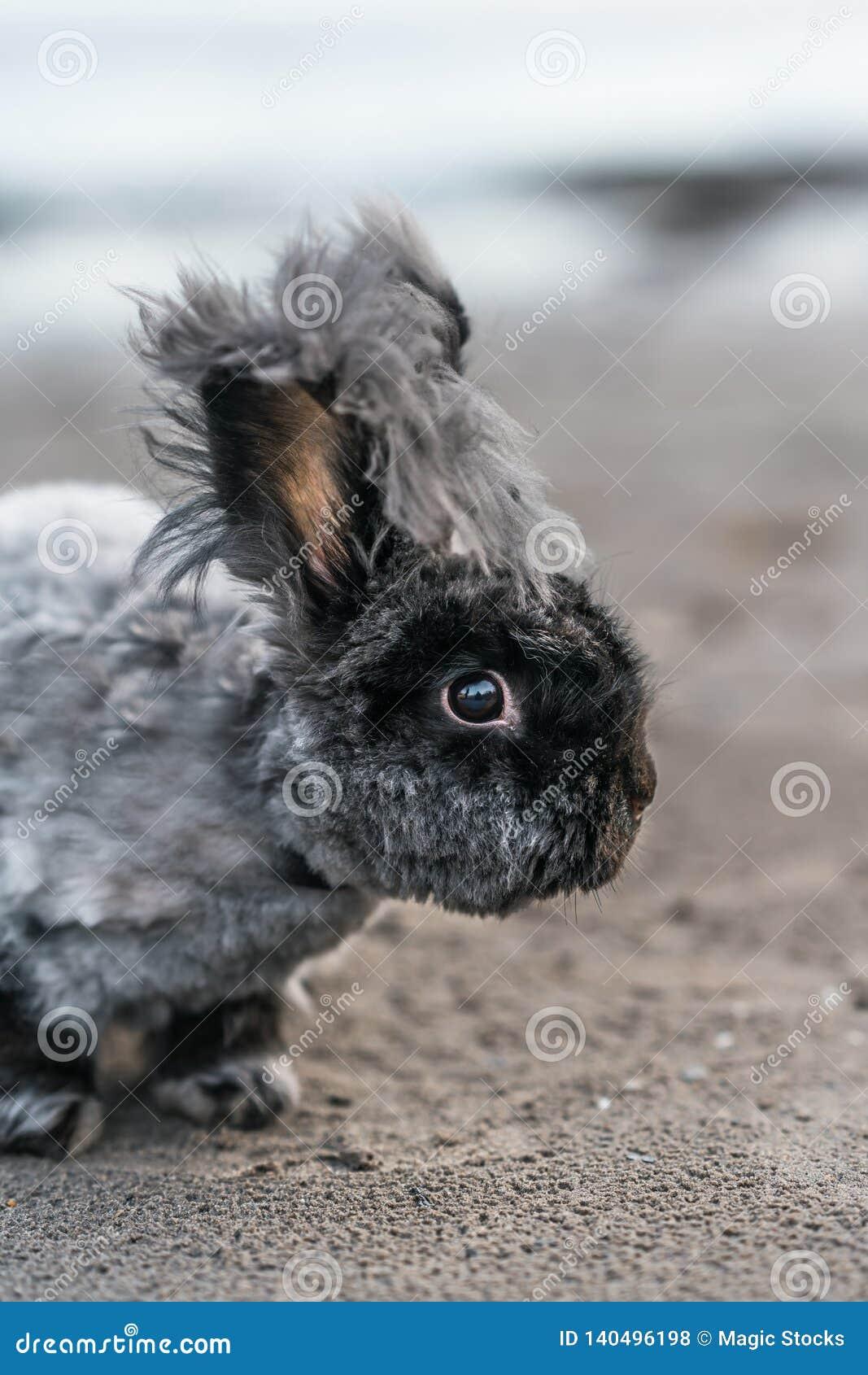 Leuk angora konijntje