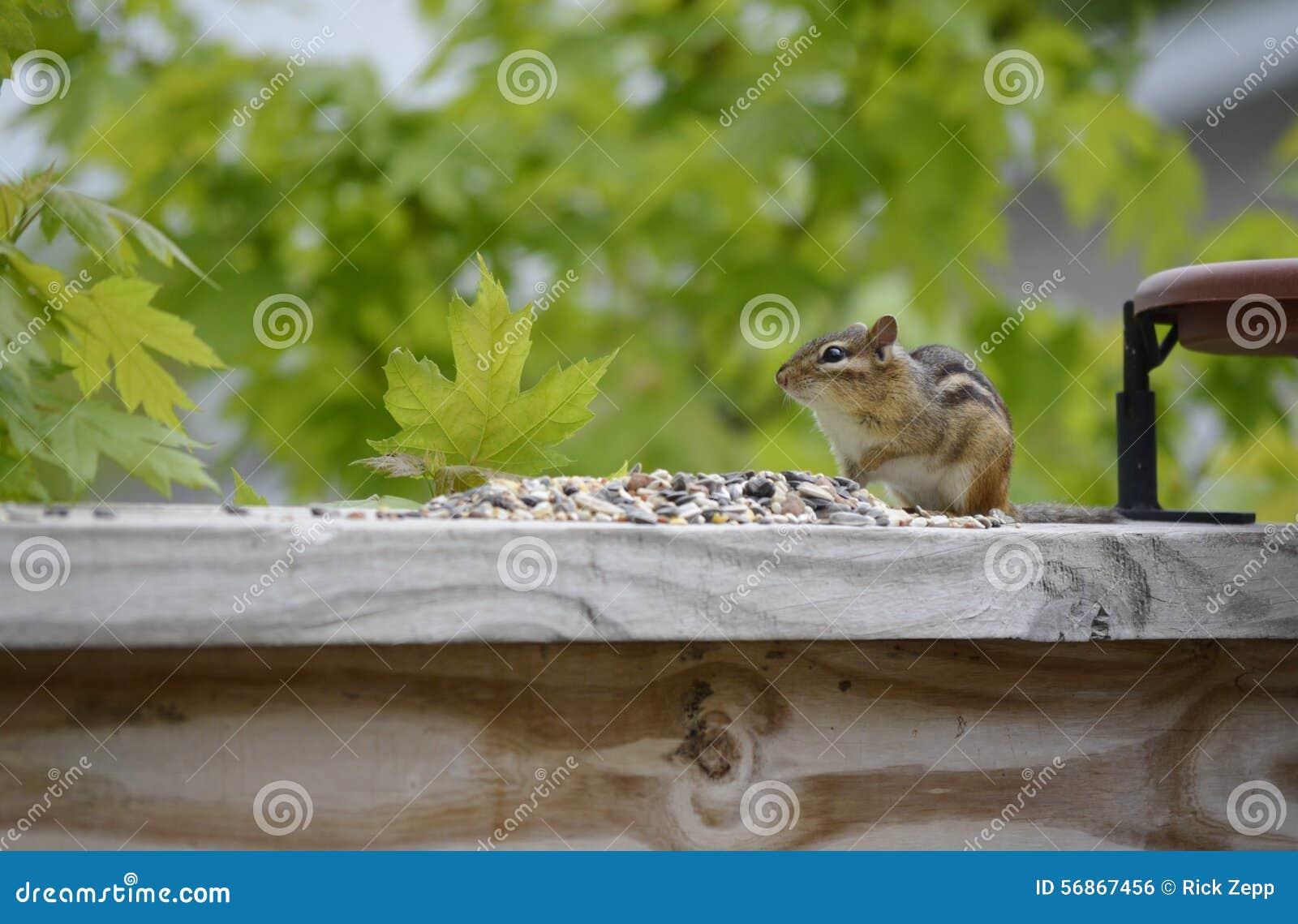 Leuk en Aanbiddelijk weinig Aardeekhoorn