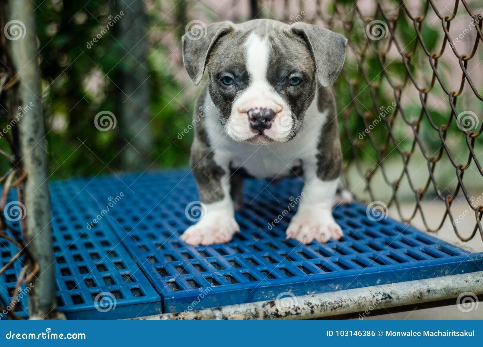 Leuk hond openluchtschot