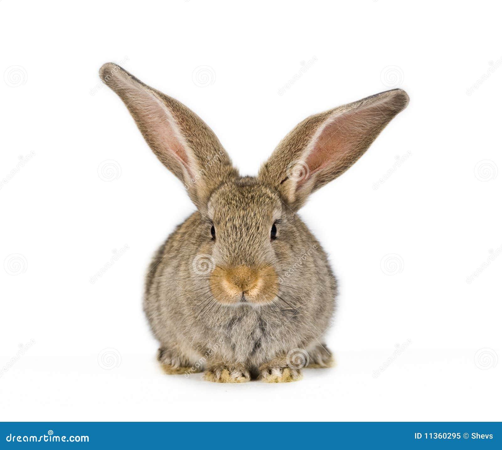 Leuk ontsproot weinig konijn frontaal