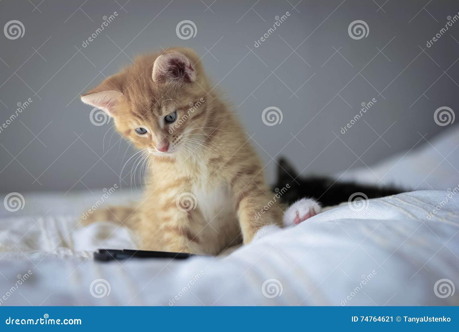 Leuk oranje katje met grote poten die met een stuk speelgoed spelen