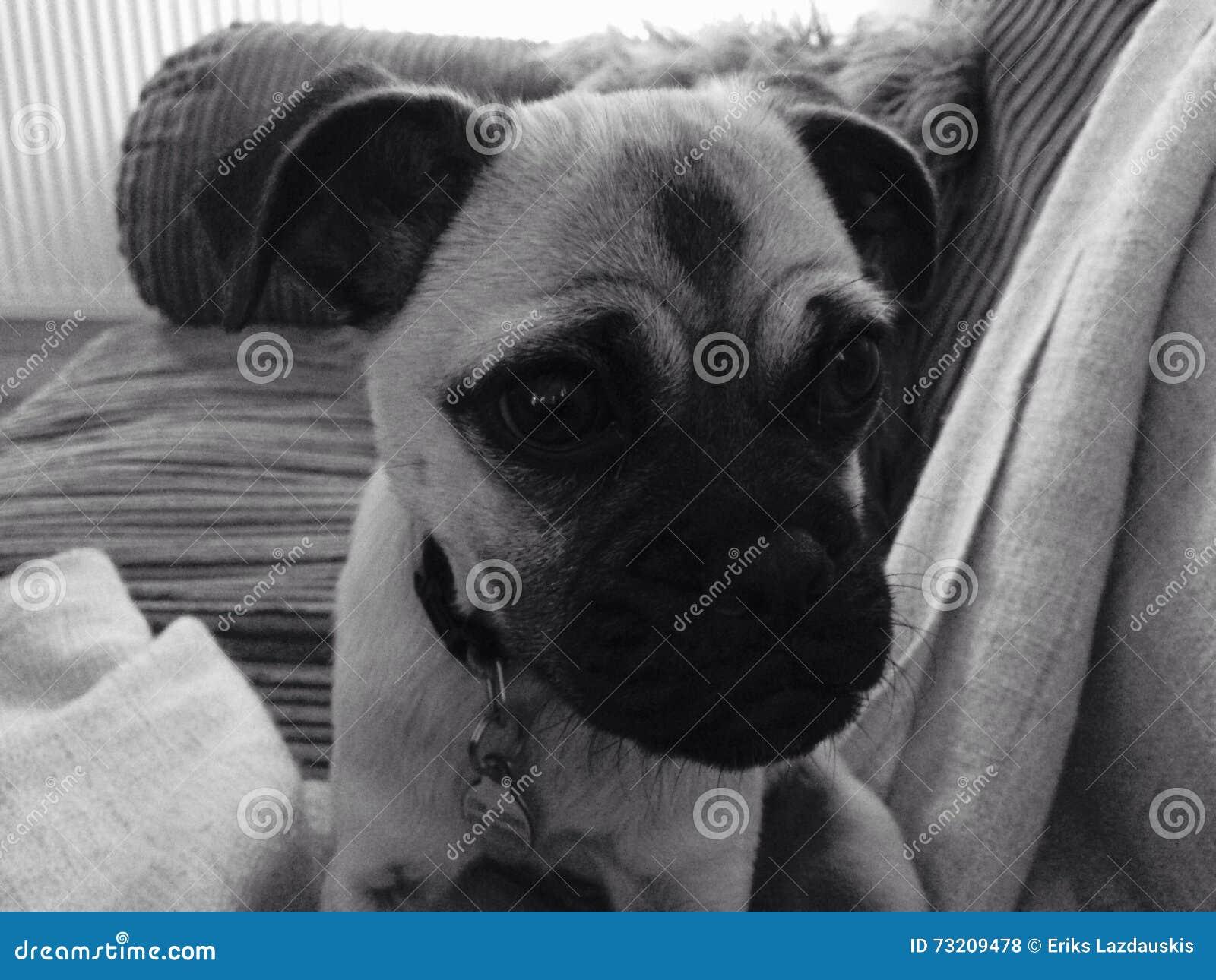 Leuk Puppy