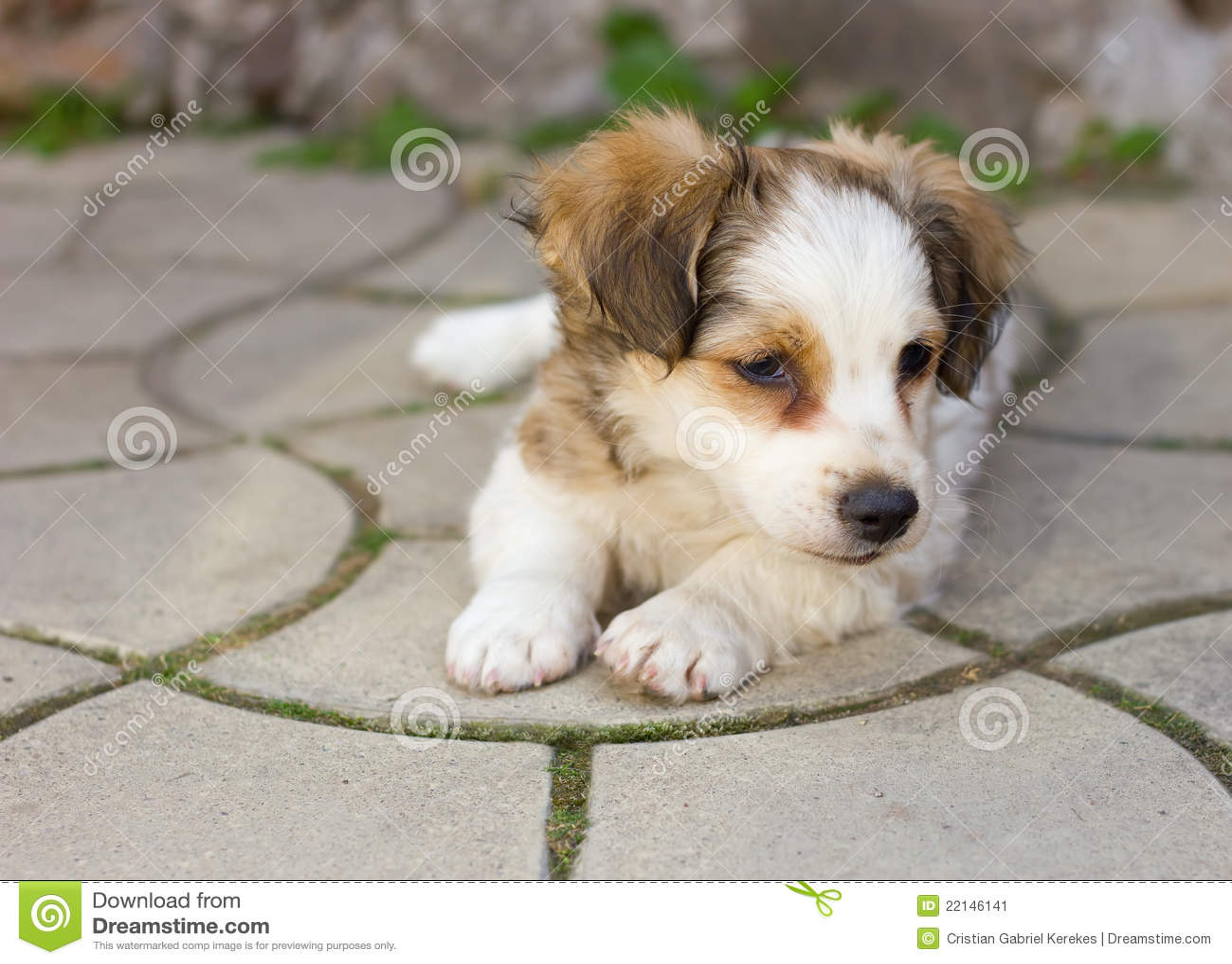 Leuk puppy dat op bestrating legt