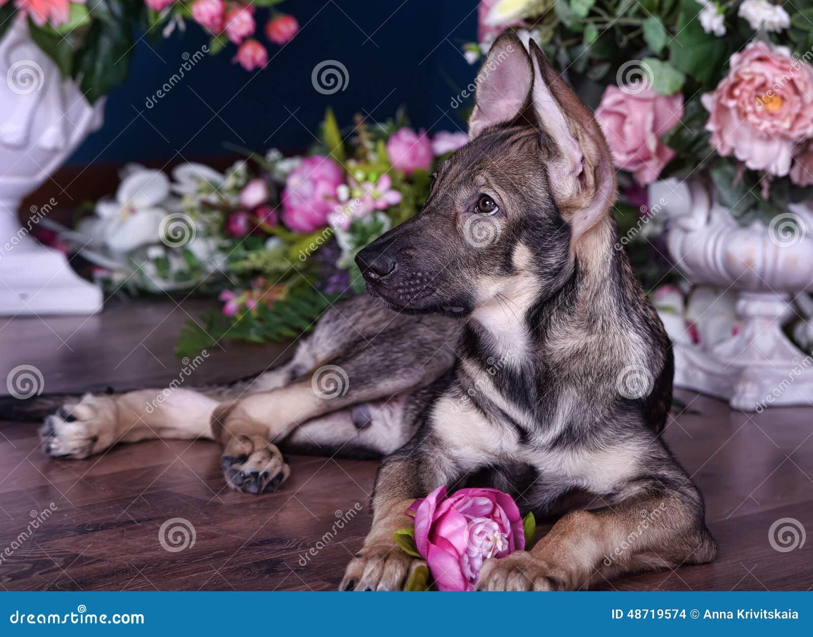 Leuk puppy die op de vloer met bloemen liggen
