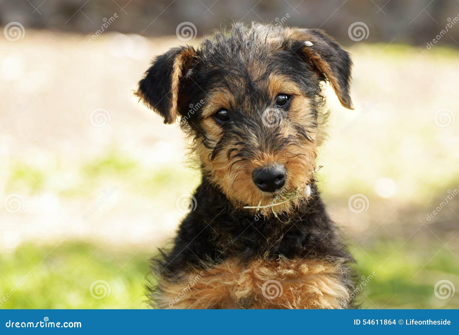Leuk puppy overhellend hoofd aan zij onschuldige uitdrukking