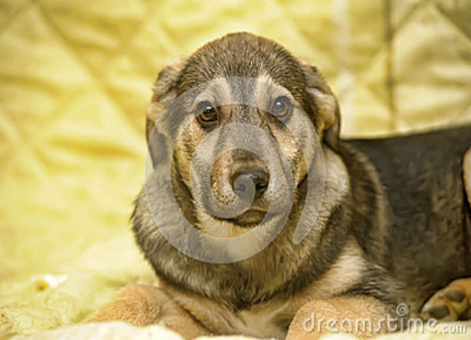 Leuk puppy pooch