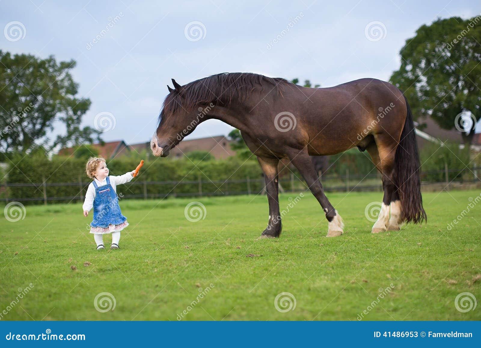 Leuk weinig babymeisje die groot paard op boerderij voeden
