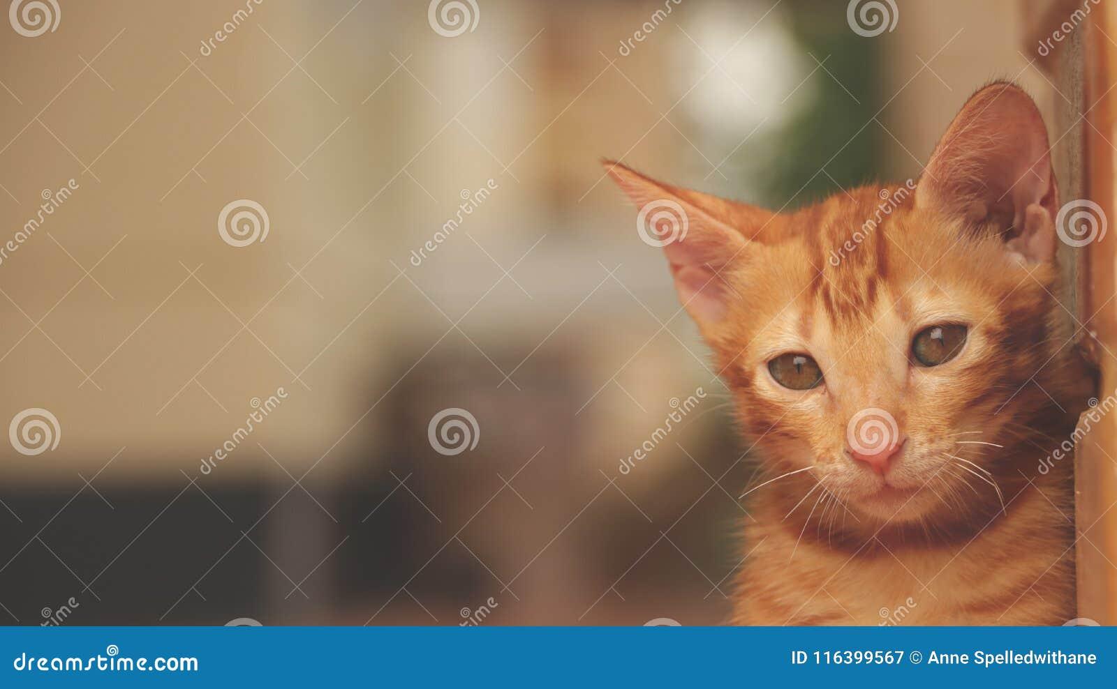Leuk Weinig Cat Sitting door Gele Muur - Droevig Gezicht