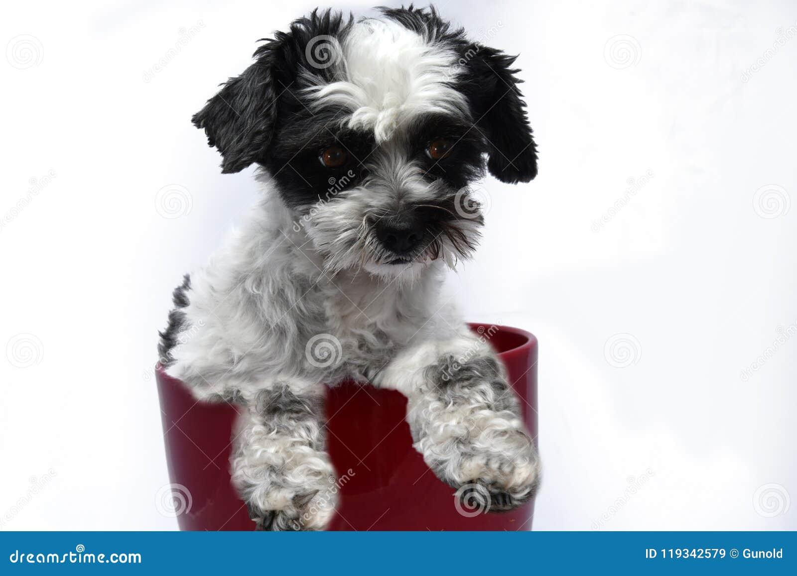 Leuk weinig hond met grote ogen in bloempot