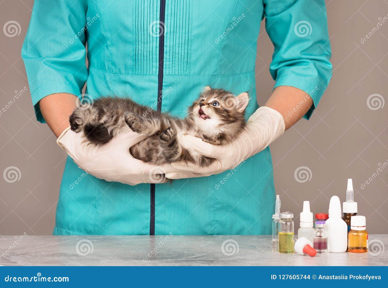 Leuk weinig katje