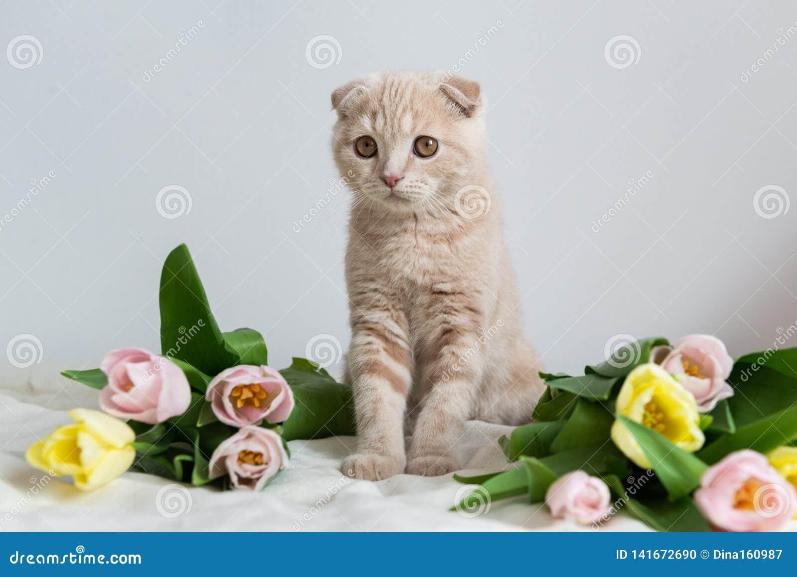 Leuk weinig katje met bloemenboeket De ruimte van het exemplaar Banner, vakantie, Moederdag, Valentijnskaartendag en Gelukkig ver