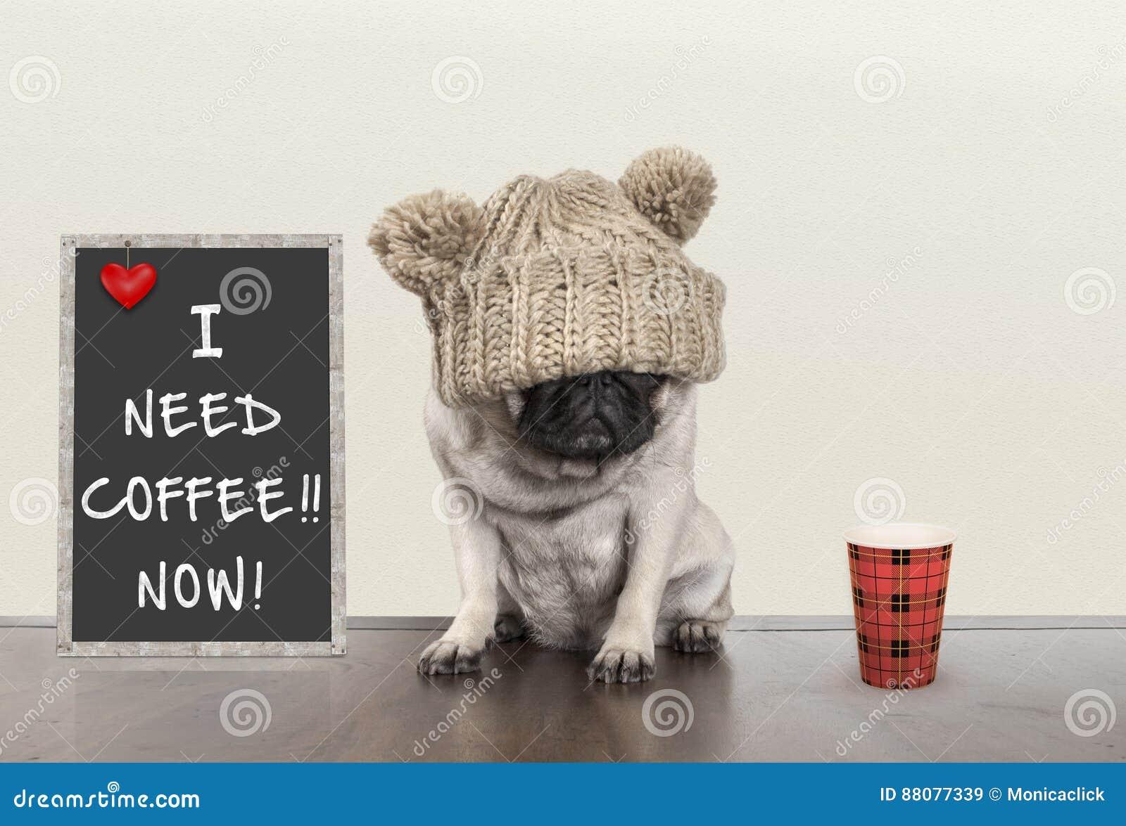 Leuk weinig pug puppyhond met slechte ochtendstemming, die naast bordteken met tekst I behoeftekoffie zitten nu, exemplaarruimte