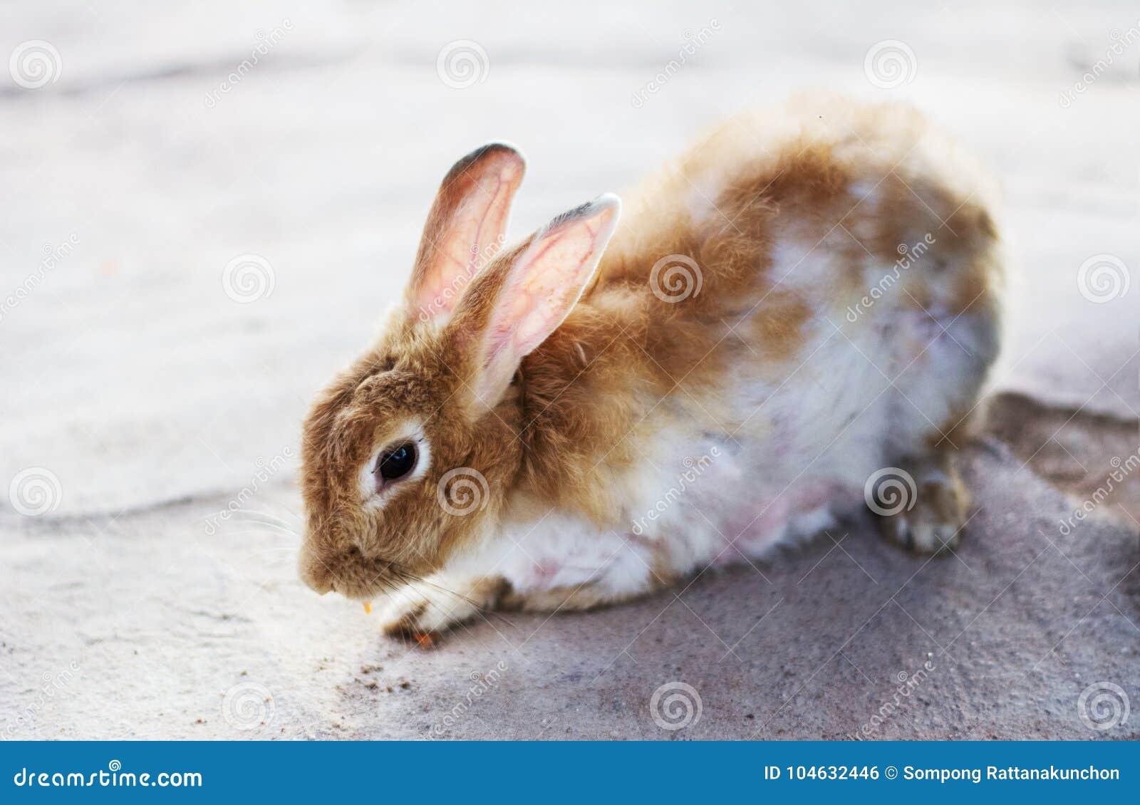 Download Leuk wild konijntjeskonijn stock foto. Afbeelding bestaande uit feeding - 104632446