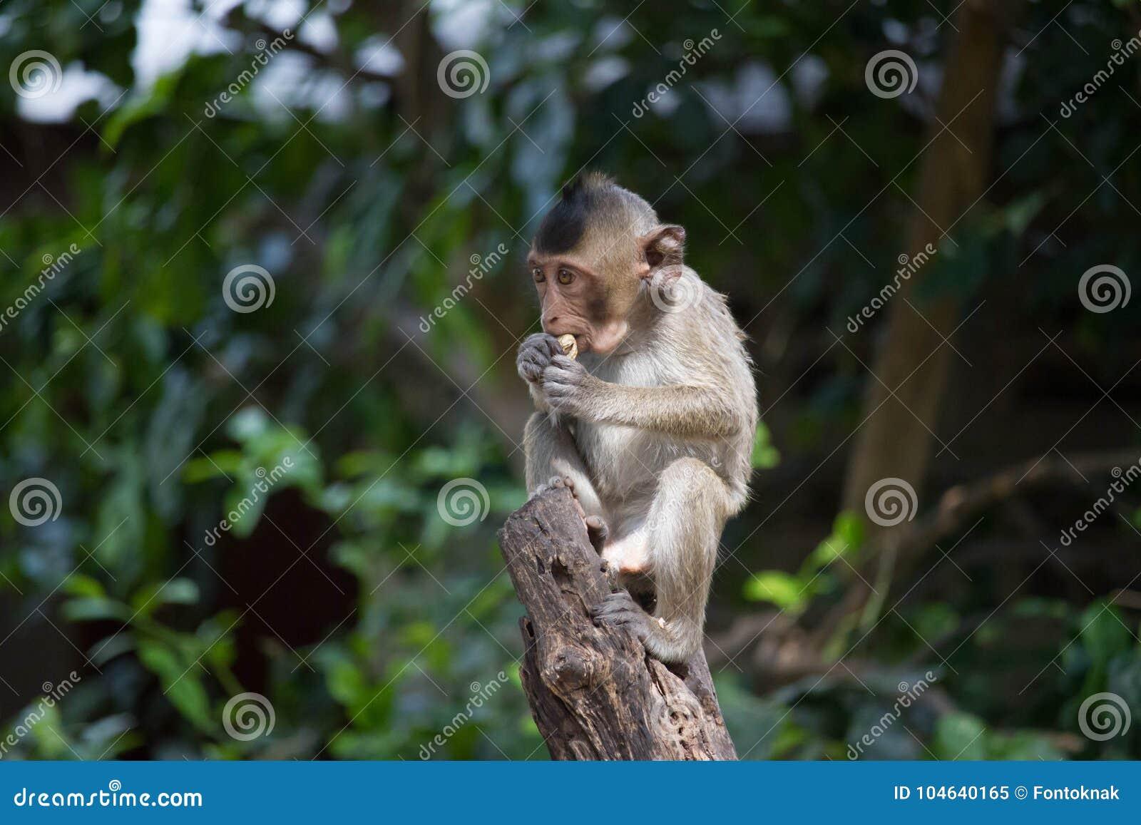 Download Leuke aap stock afbeelding. Afbeelding bestaande uit leuk - 104640165
