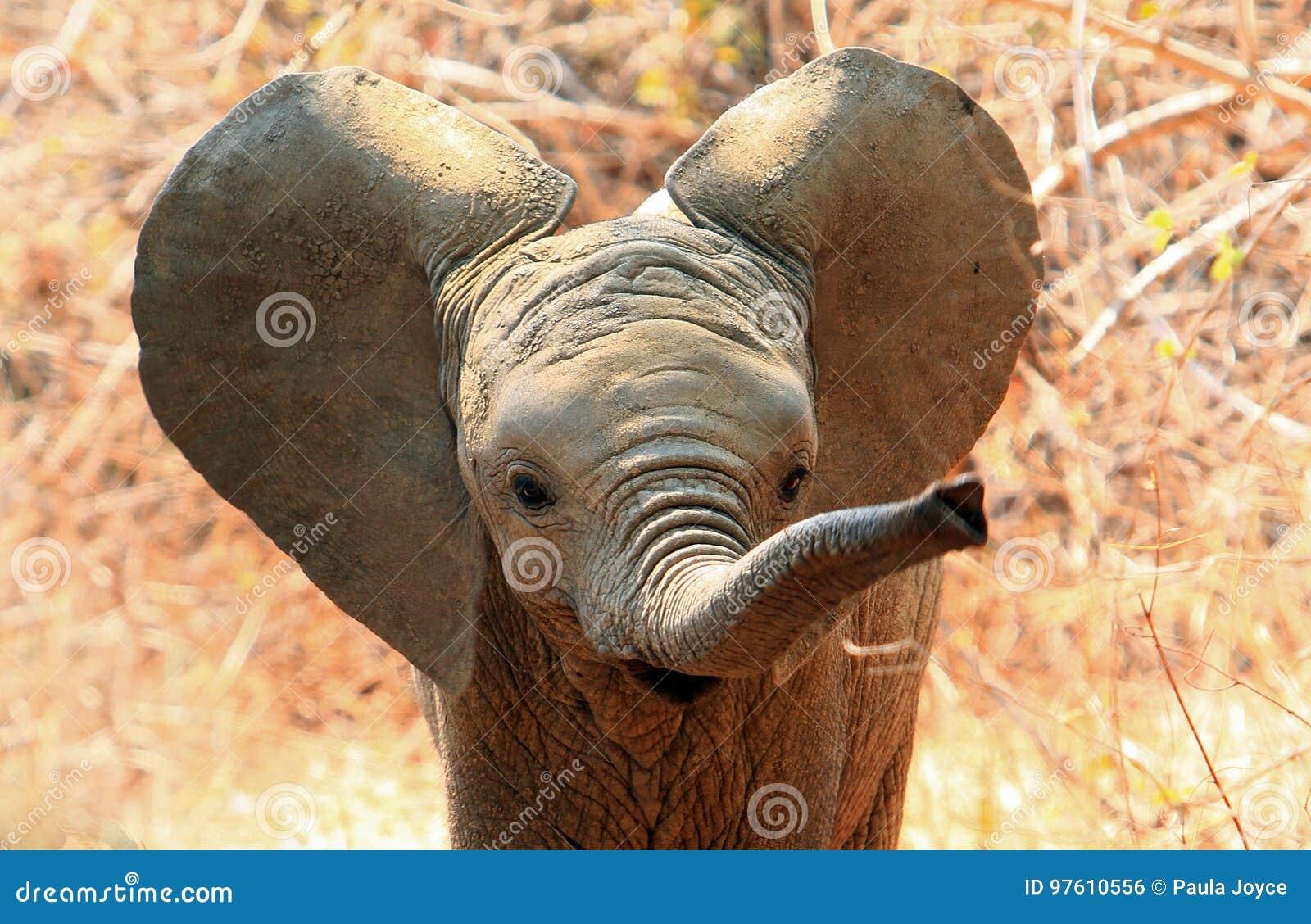 Leuke babyolifant met oren het klappen en uitgebreide boomstam