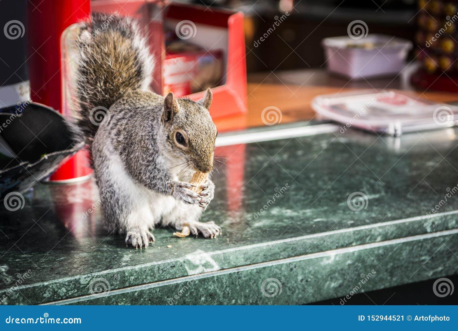 Leuke eekhoorn stealing noten van openluchtbar
