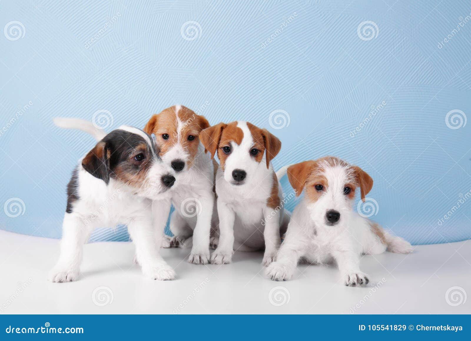 63451fed1a6be3 Leuke grappige honden stock afbeelding. Afbeelding bestaande uit ...