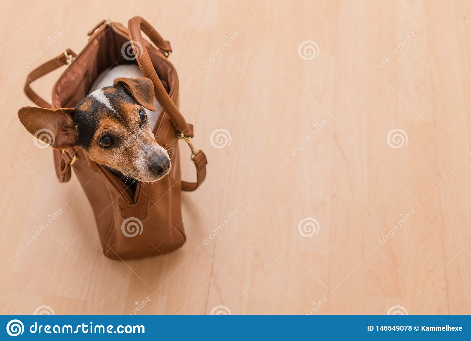 Leuke hefboom Russell van een hond in een zak