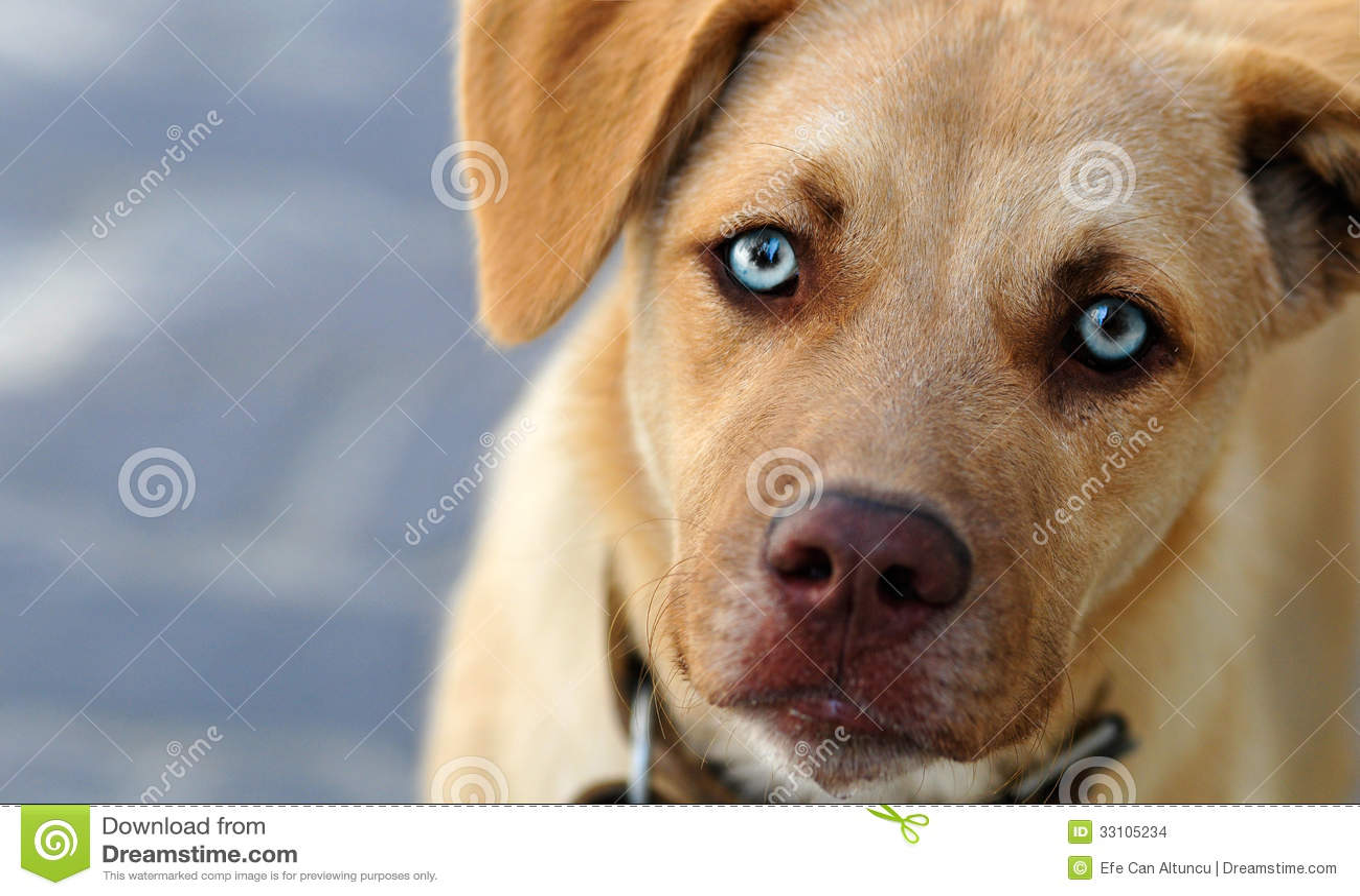 Leuke Hond