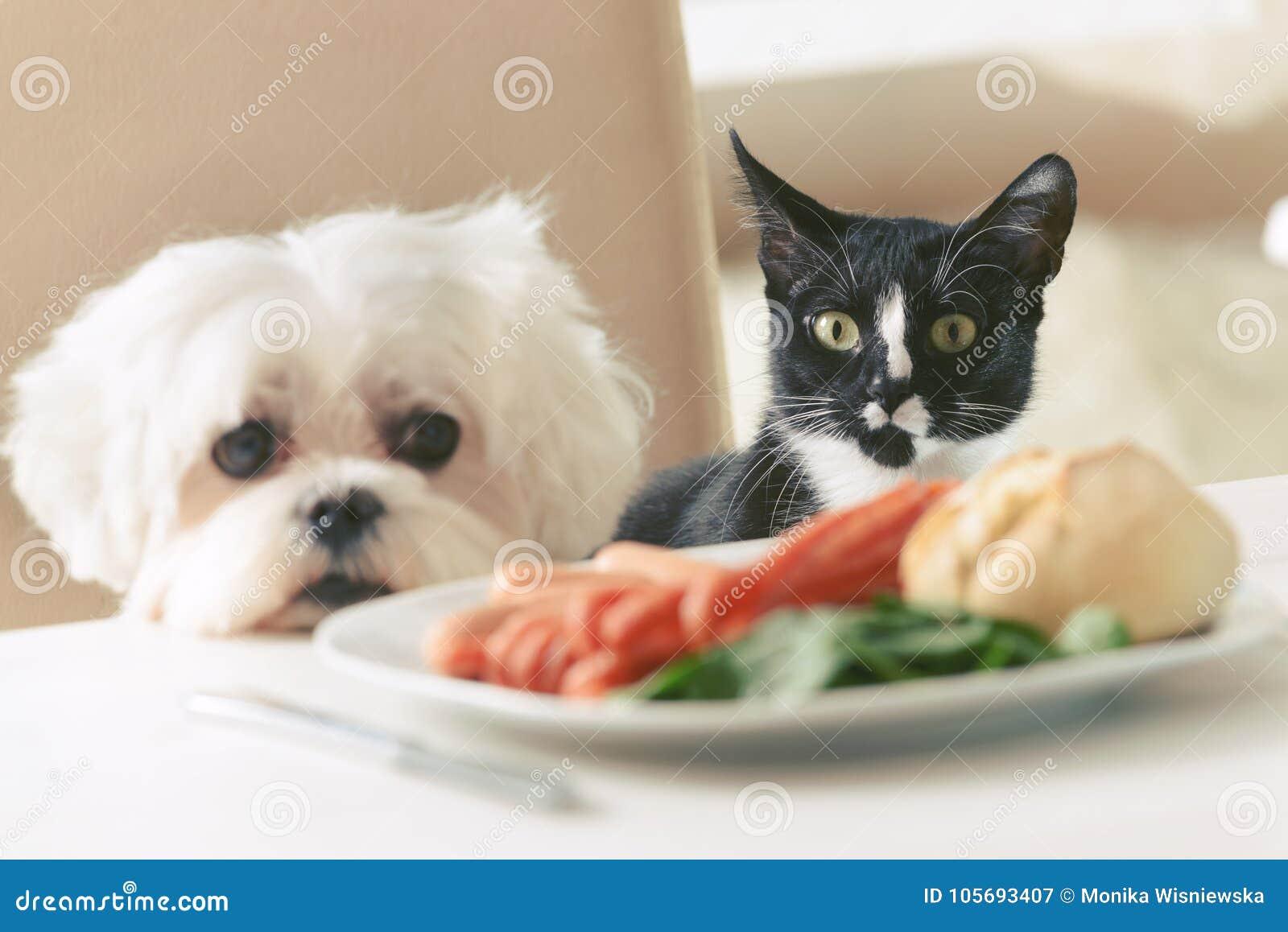 Leuke hond en kat die om voedsel vragen
