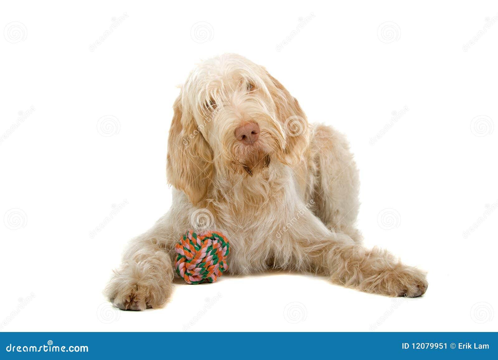 Leuke hond met kleurrijk stuk speelgoed