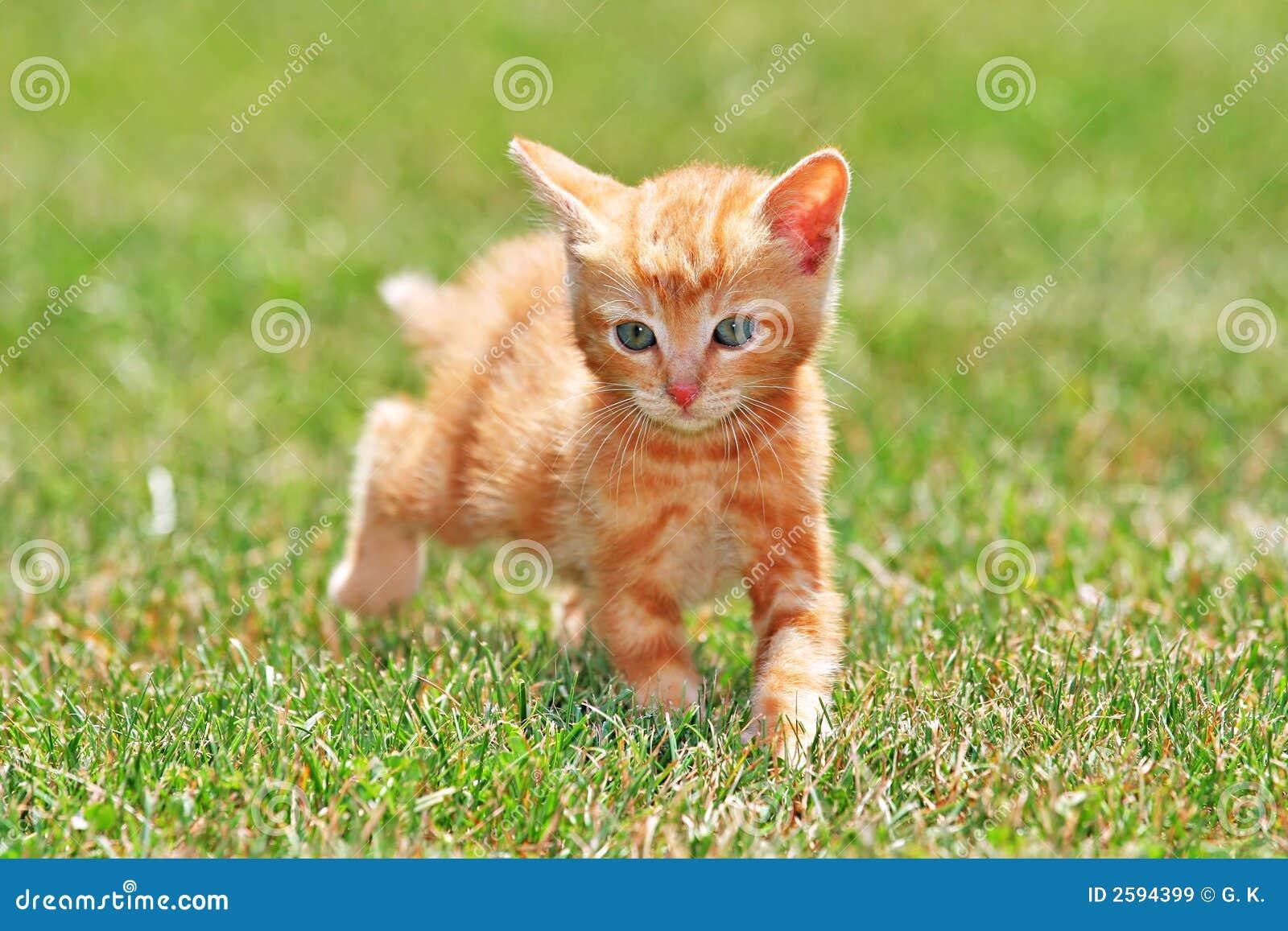 Leuke Kat
