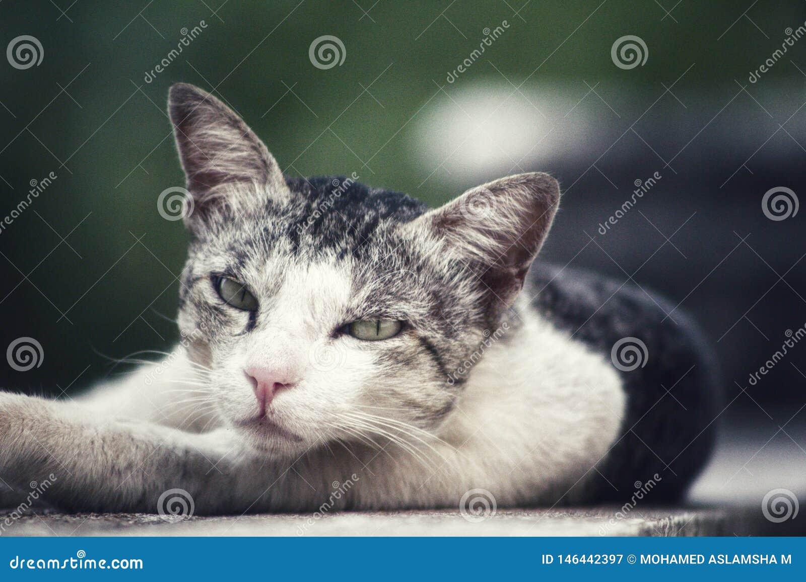 Leuke kat die in het midden van de muur legt