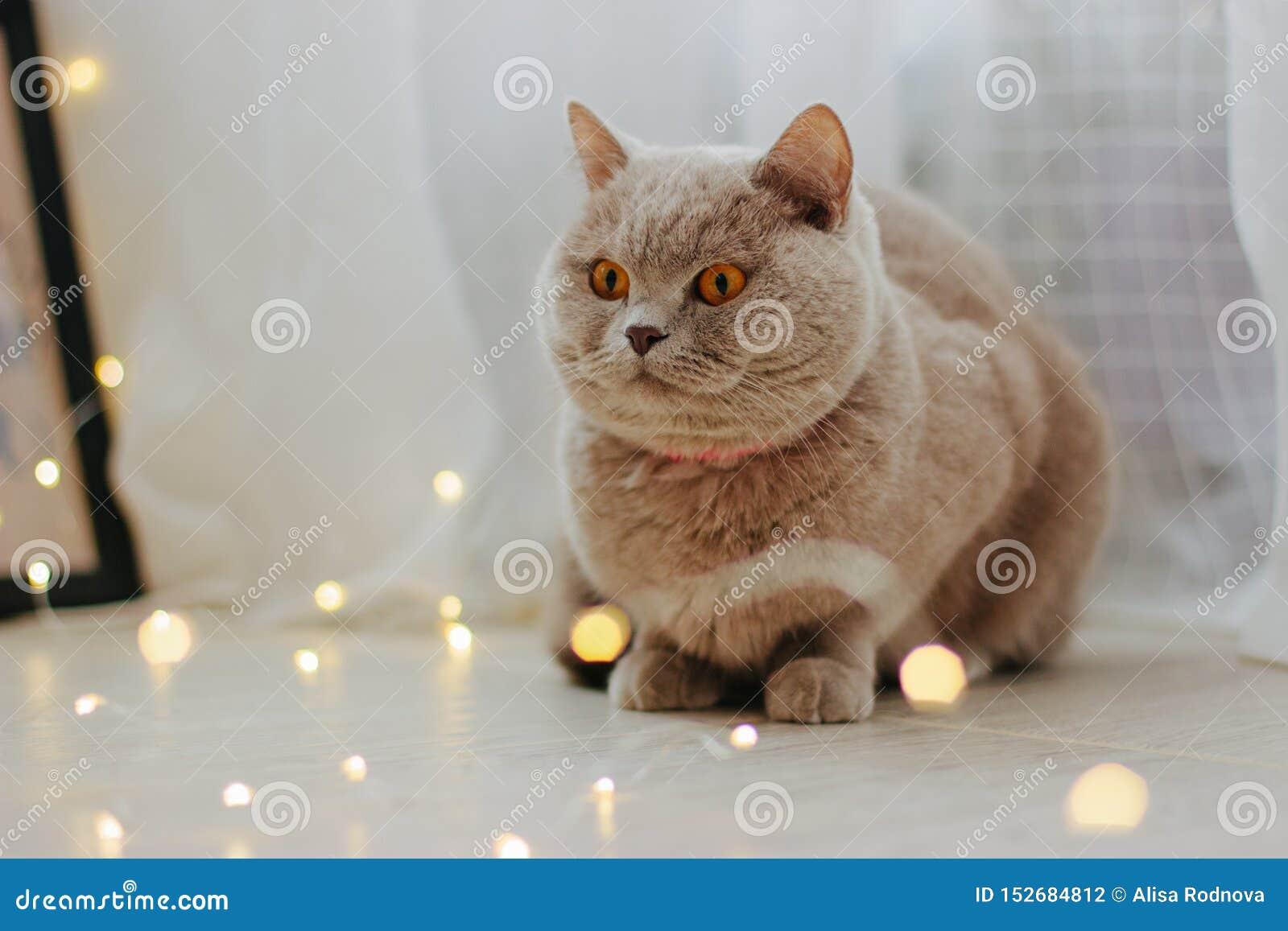 Leuke kat en vage Kerstmislichten