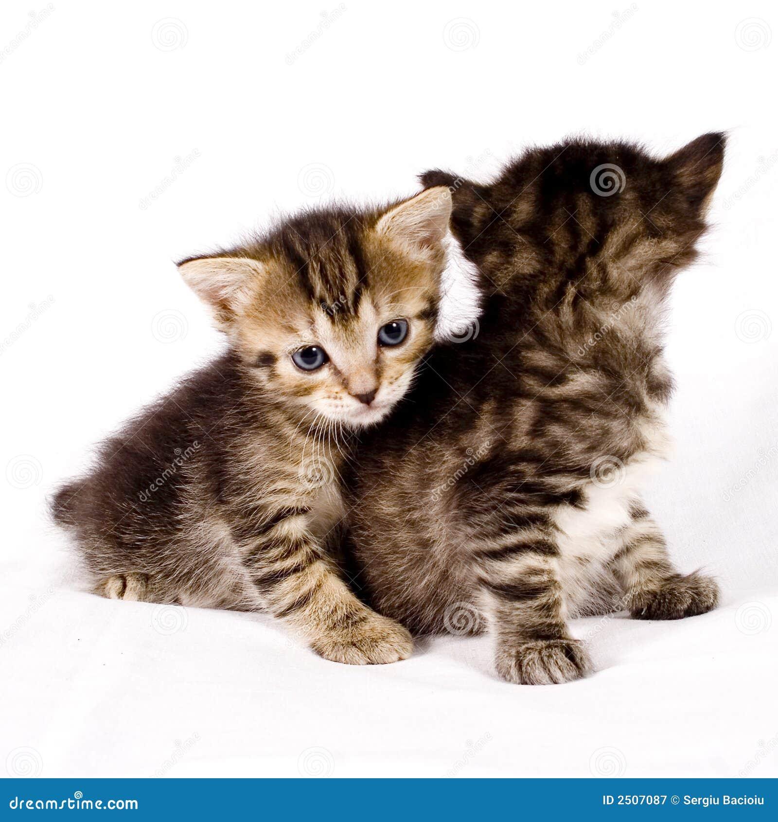 Leuke katten