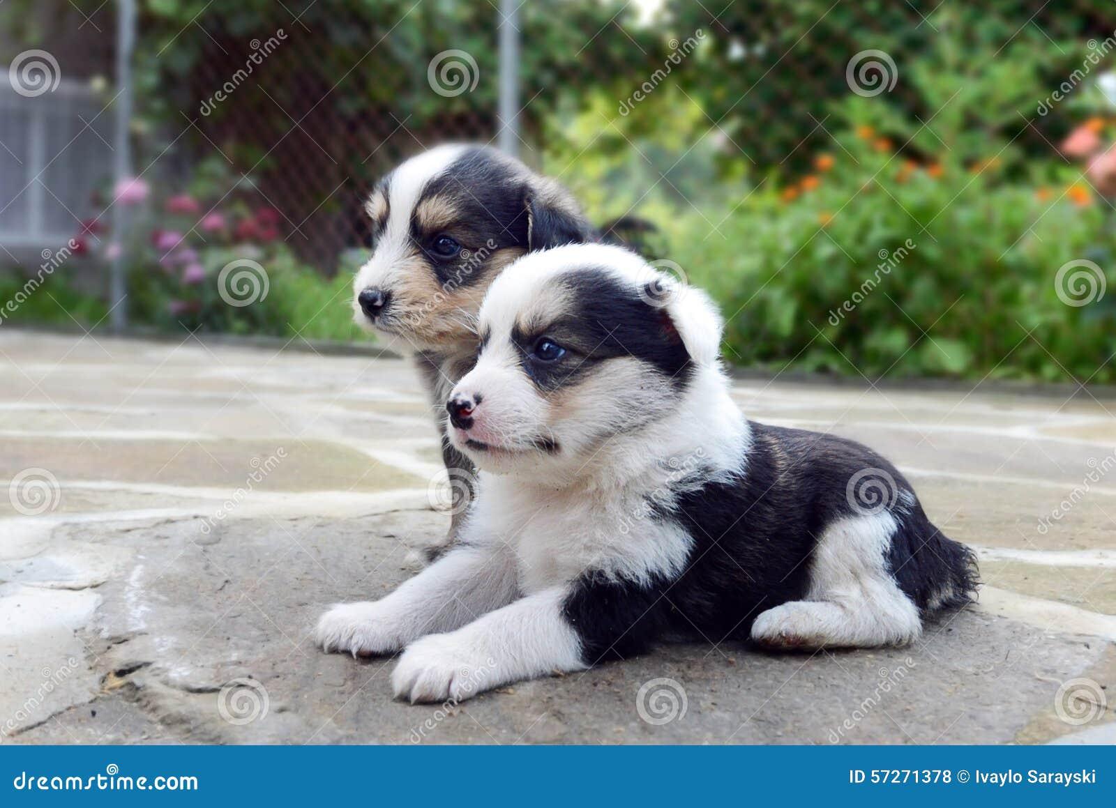 Kleine Hondenras  Beste waakhonden alletop lijstjes  Hondenrassen fox terri r draadhaar litle