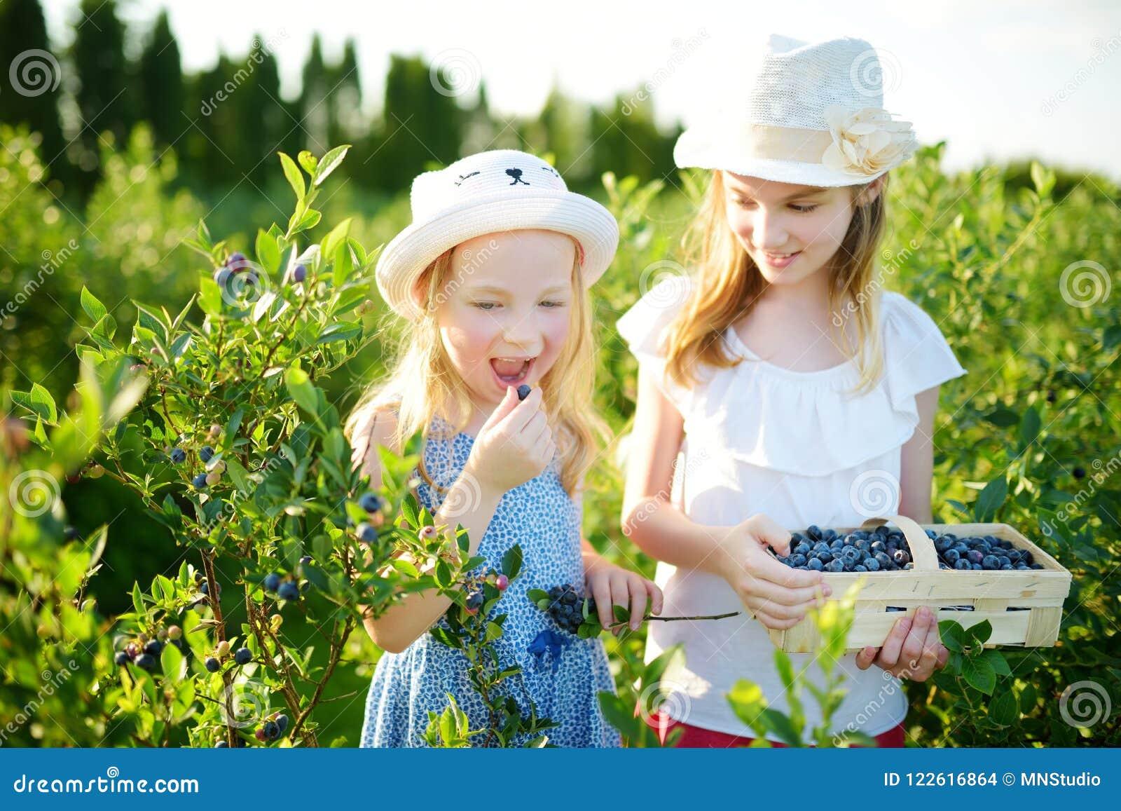 Leuke kleine zusters die verse bessen op organisch bosbessenlandbouwbedrijf plukken op warme en zonnige de zomerdag Verse gezonde
