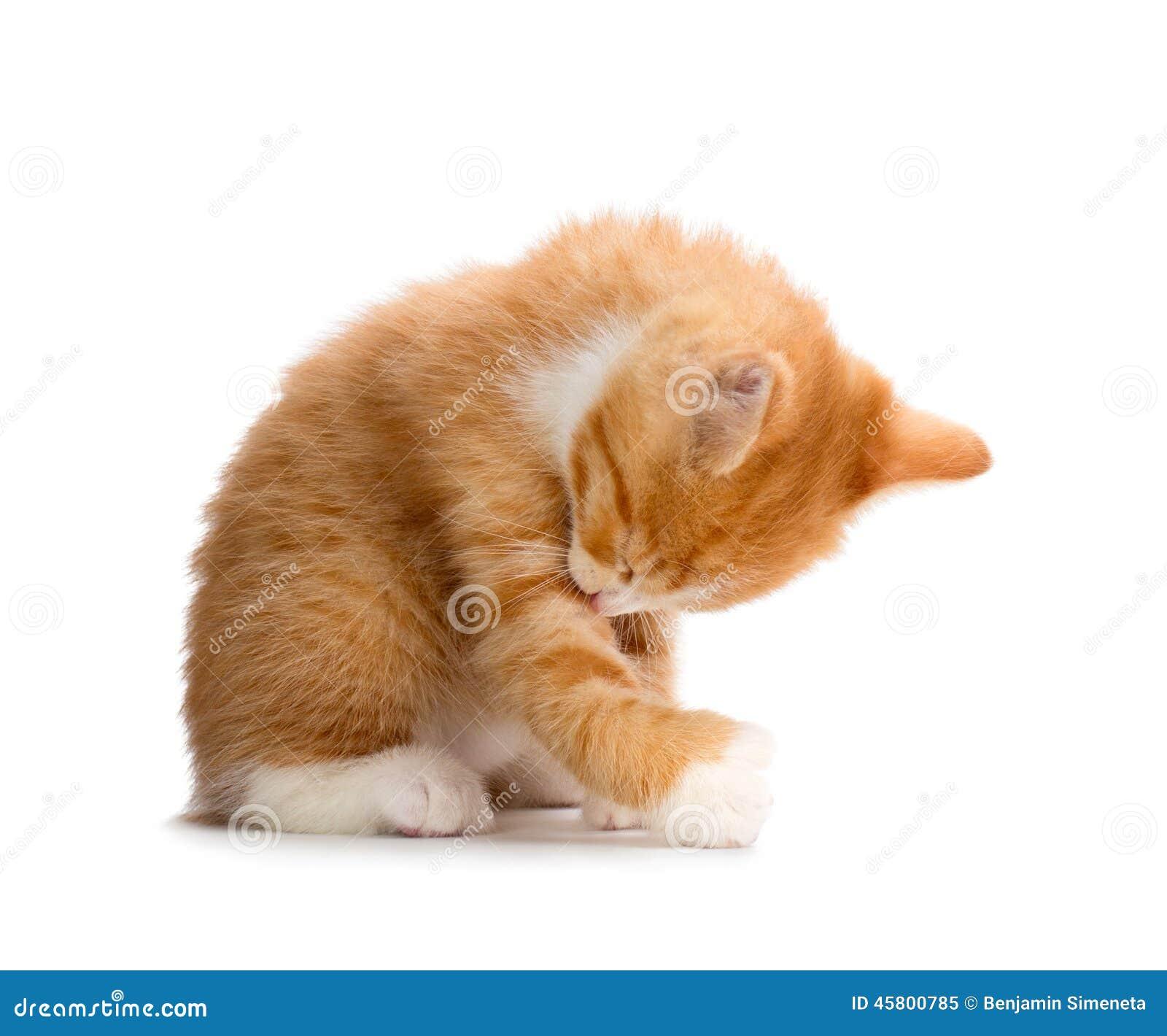 Leuke Oranje Kitten Bathing op Witte Achtergrond