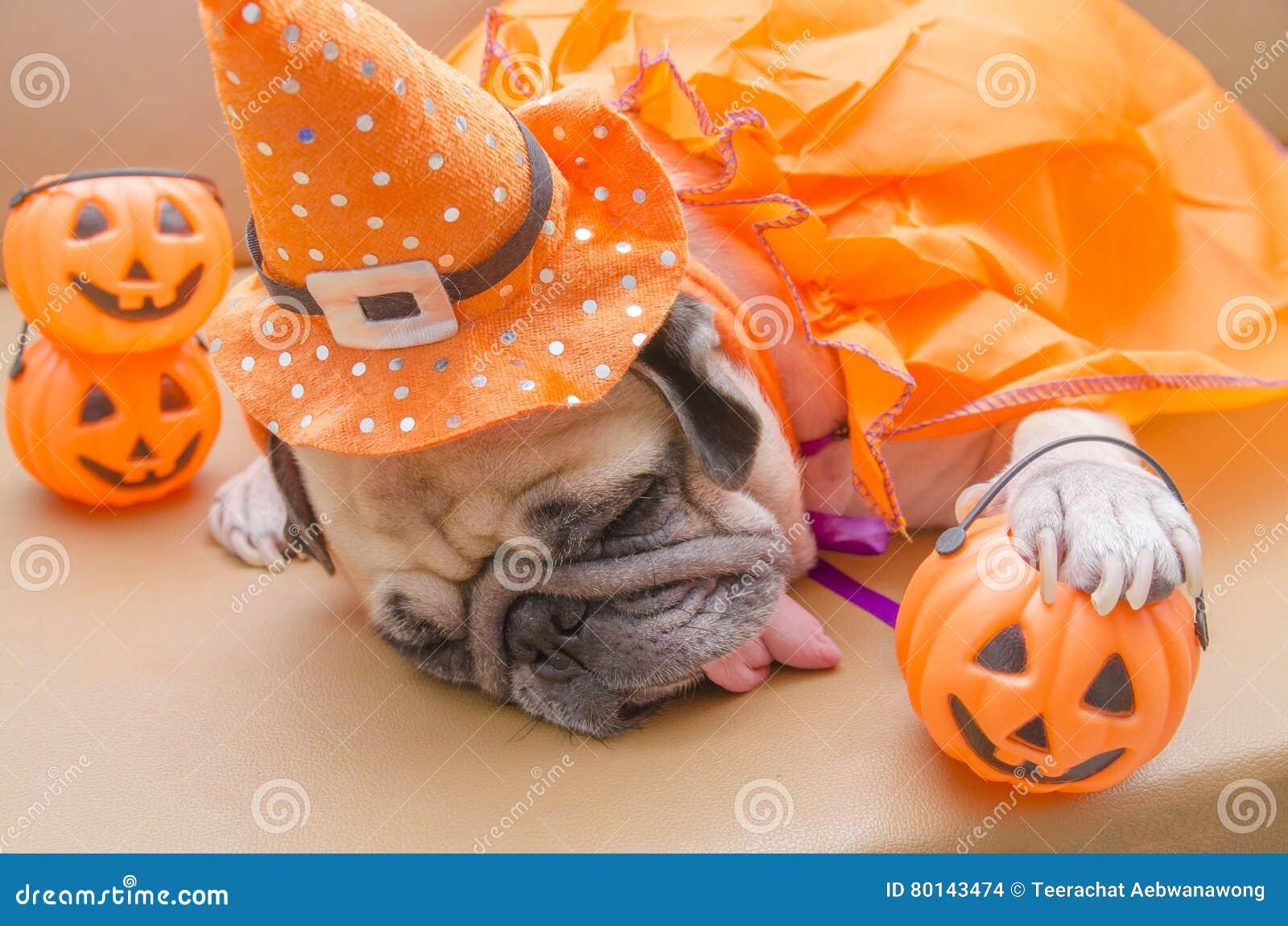 Leuke pug hond met kostuum van de gelukkige Halloween-rust van de dagslaap op s