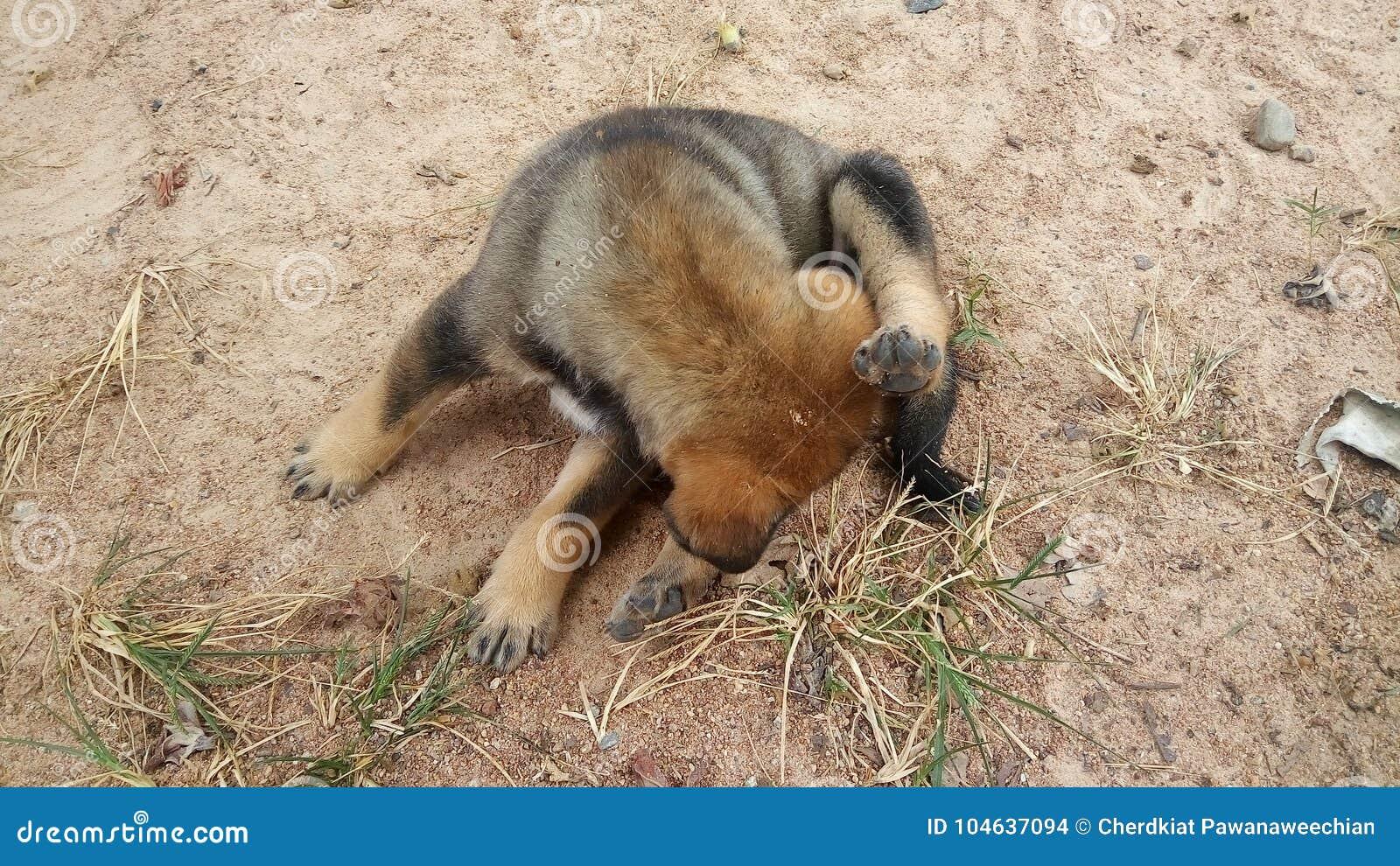 Download Leuke Puppyhond Die In Openlucht Ruiken Stock Foto - Afbeelding bestaande uit verandering, hygiëne: 104637094