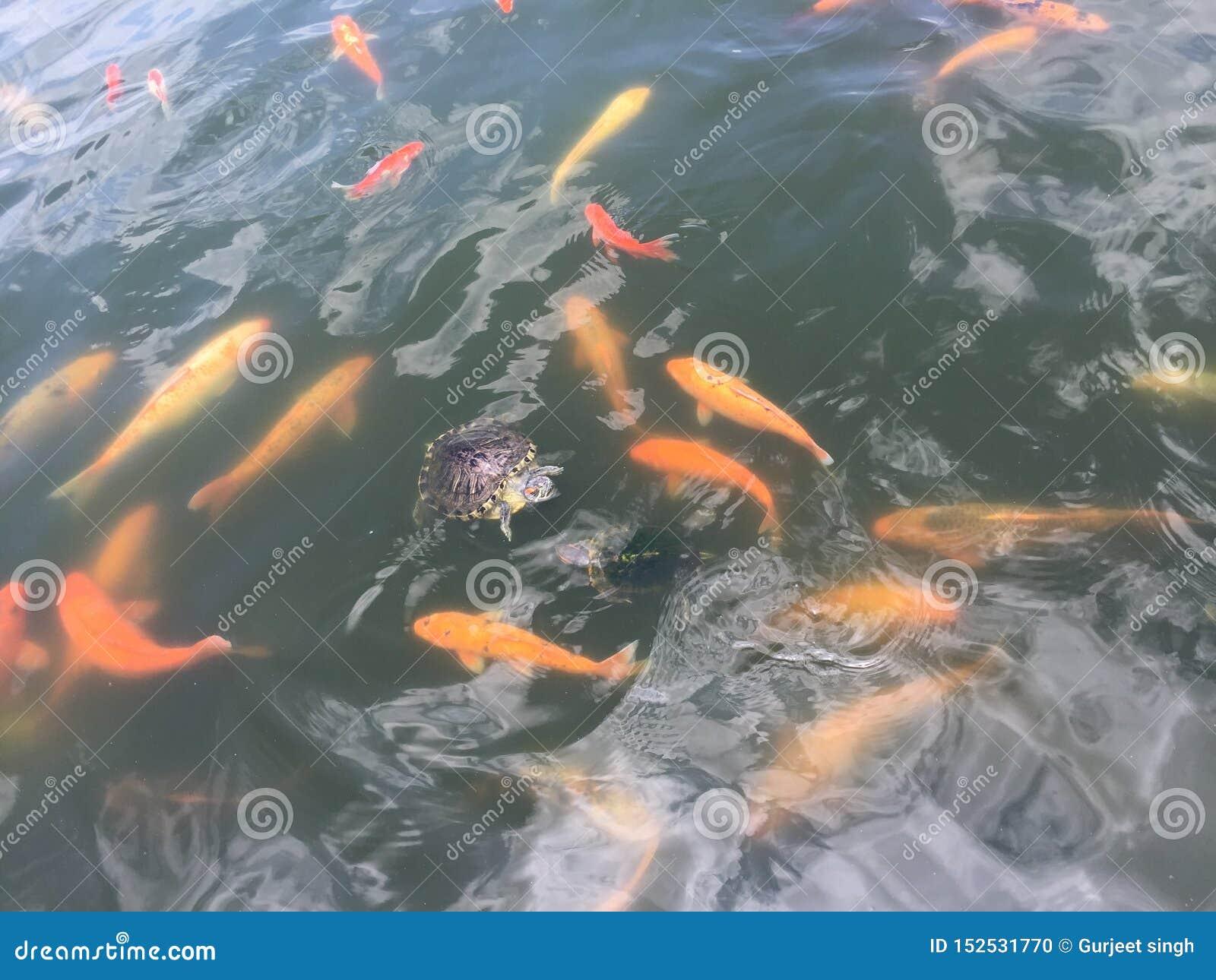 Leuke schildpad in kleurrijke vissen