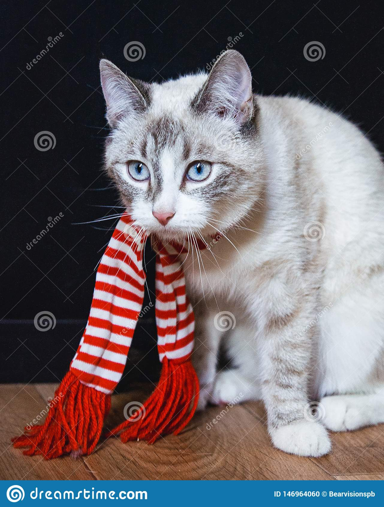 Leuke witte kat in gestreepte sjaalzitting op de vloer die droevig eruit zien