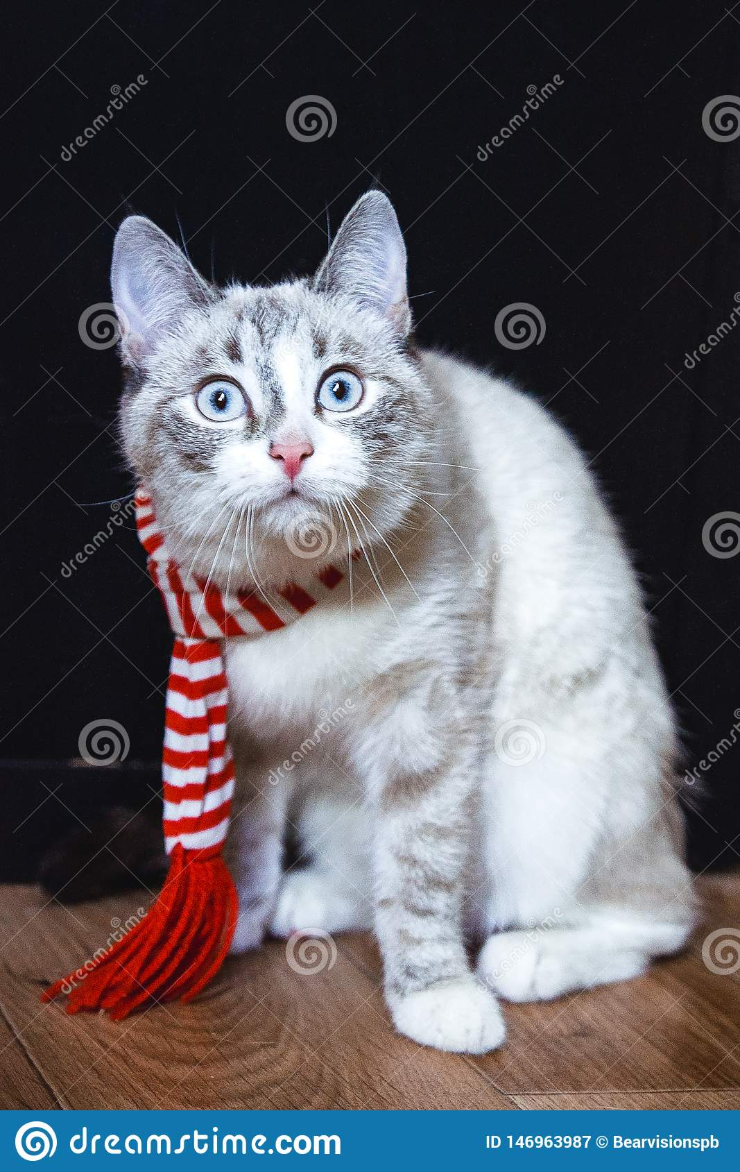 Leuke witte kat in gestreepte sjaalzitting op de vloer die vastbesloten u bekijken