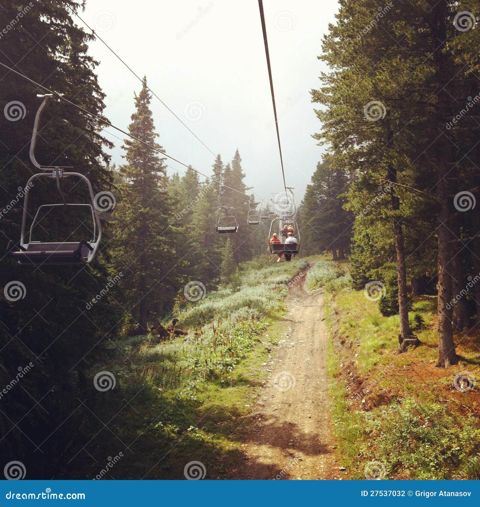 Levante en el bosque