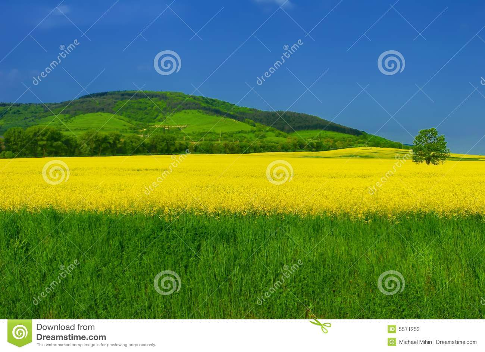 Levendig de zomerlandschap stock foto's   afbeelding: 5571253