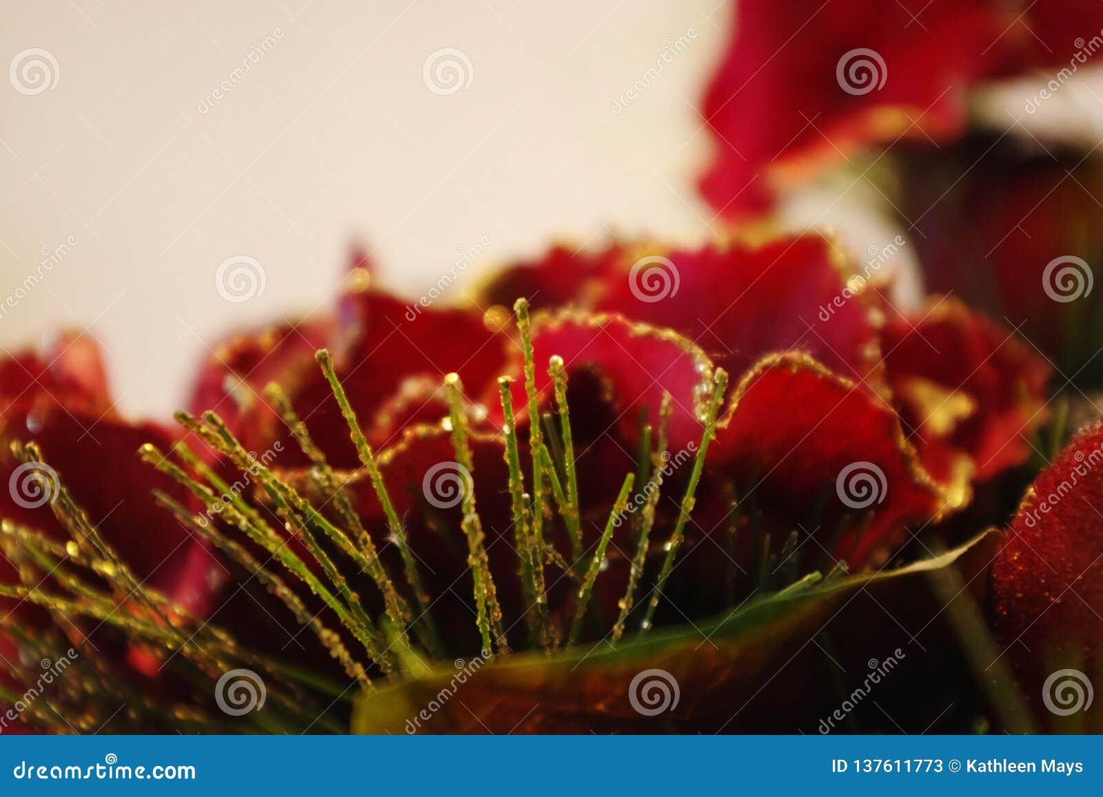 Levendige Rode en Gouden Bloesem