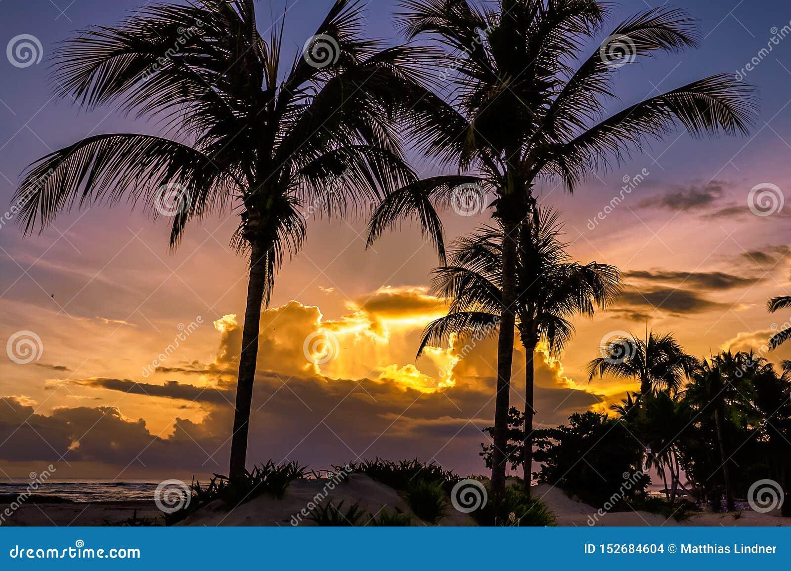 Lever de soleil à l océan avec des palmiers dans les Caraïbe Puerto Plata
