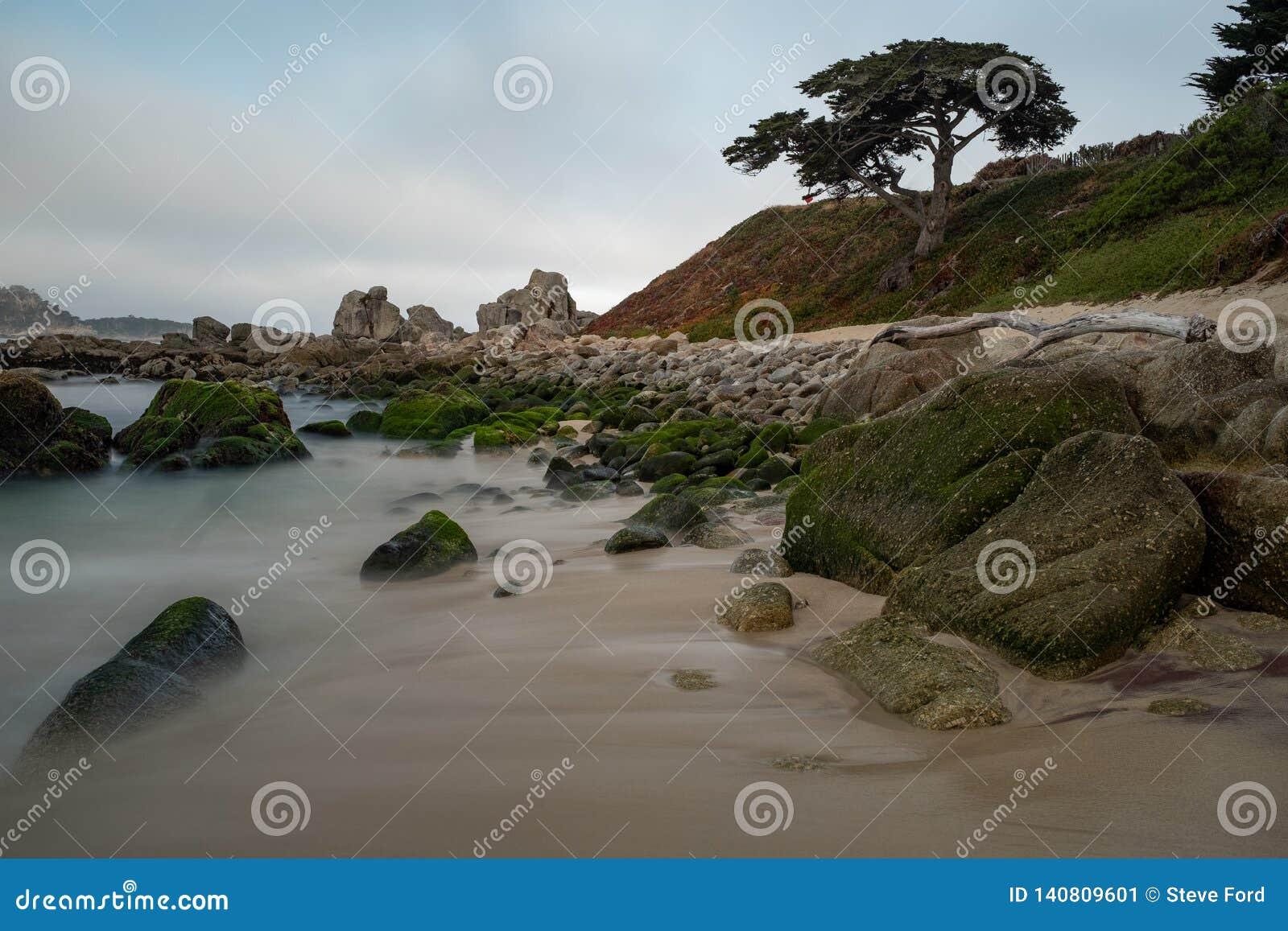 Lever de soleil à la côte de Carmel, CA, tir de plage avec le pin solitaire, longue exposition pour lisser l eau