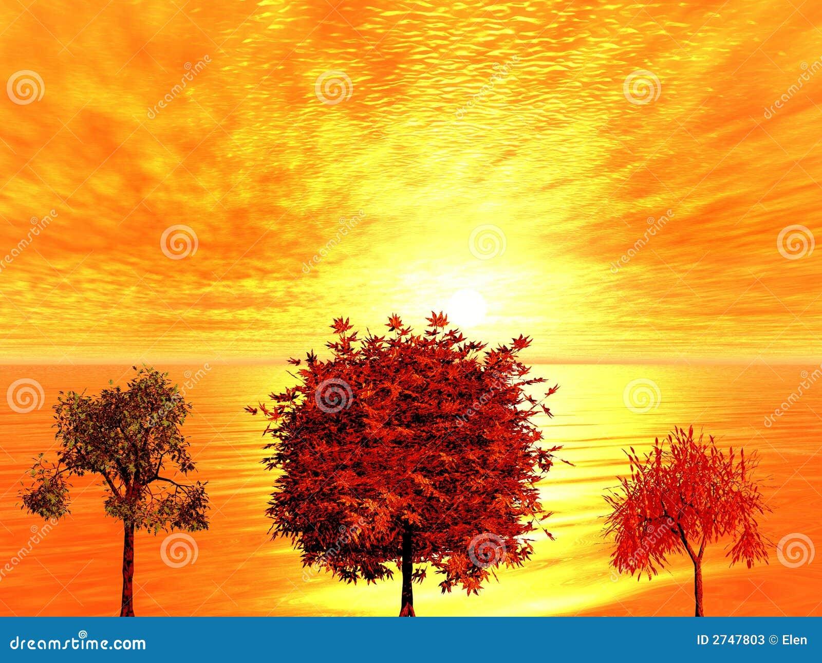 Lever de soleil arbres d 39 automne photos stock image - Arbre d automne dessin ...
