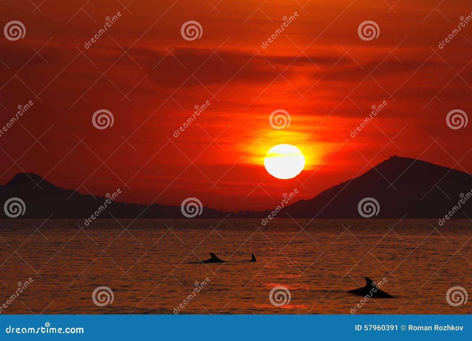 Lever de soleil au-dessus de la Mer Noire Silhouettes des dauphins à l aube